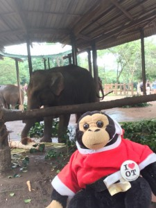 Ash elephany